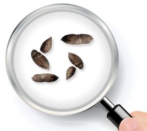 crottes lerot